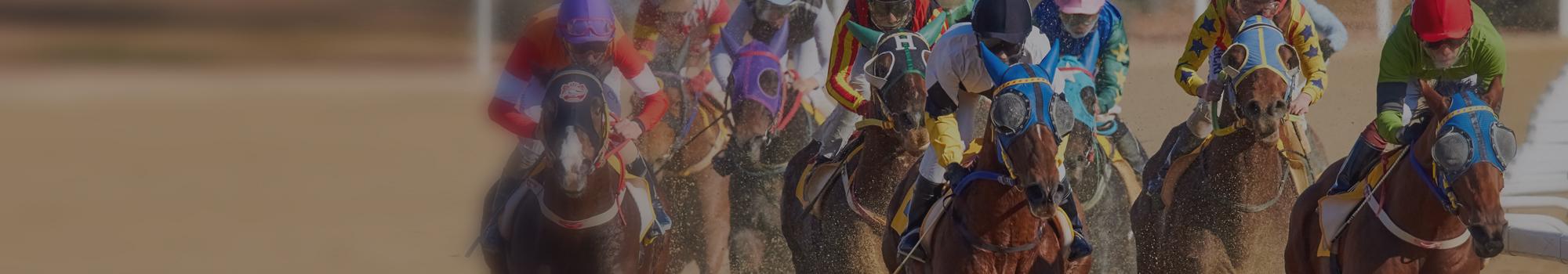 Horseracing photo
